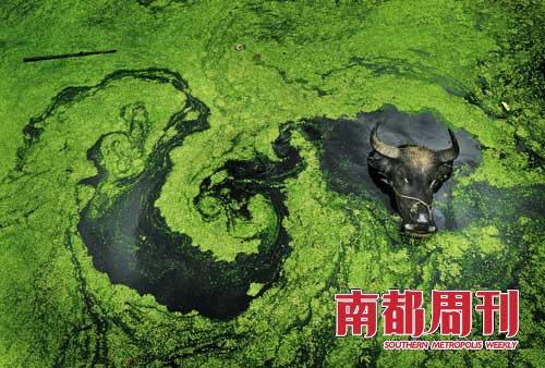 polluted-water-004-inquinamento idrico in Cina