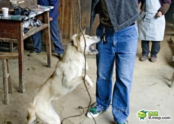 killing_dog_3