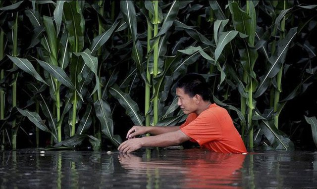 alluvioni-cina-7