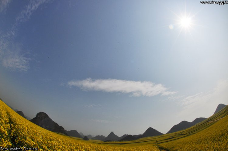 luoping_flowers_yunnan_018