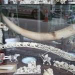 Declino del contrabbando di avorio in Cina nel 2016