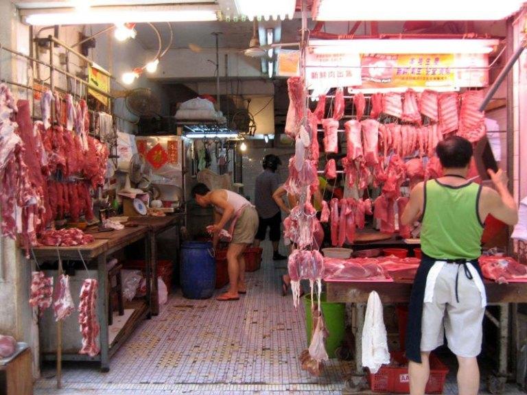 Shenzhen vieta il consumo di carne di gatto e cane e di tutti gli animali selvatici
