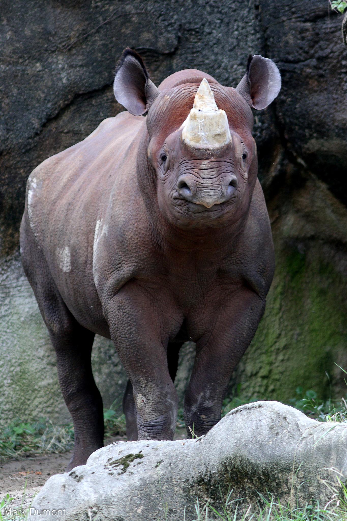 Rhino Live Cincinnati