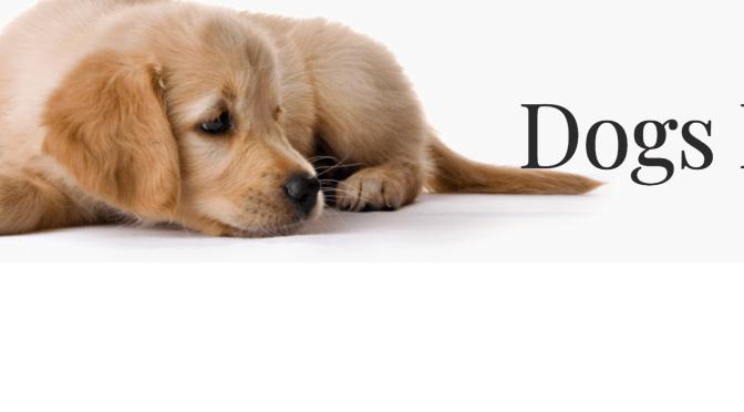 LA CAUSA DEL MES DE octubre: DOGS RESCUE CALASPARRA @DogsRescueC