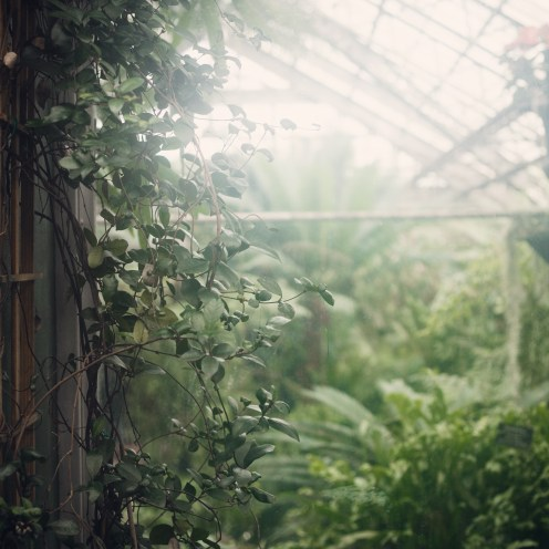 inside a misty conservatory in Chicago