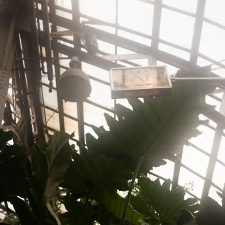 an exit sign with light and ferns