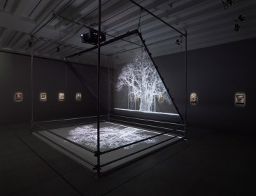 Mat Collishaw, Installation view, 2017, Courtesy the artist and BlainSouthern, Photo Peter Mallet (3)