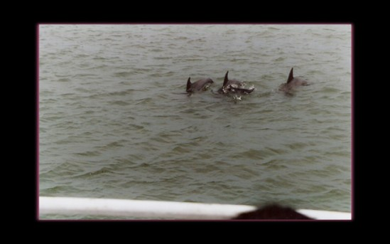 June 2004 - Hilton Head dolphins
