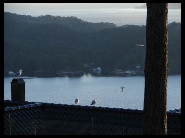 9:48 pm on July 1, 2014 - seagulls in Lysekloster, Norway