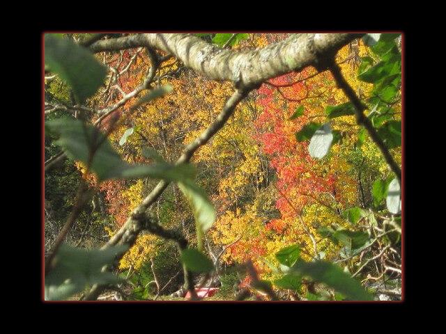 October 13, 2014 - peeking through summer to fall