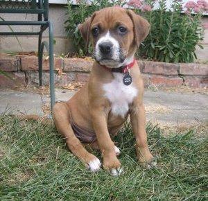 Meet Jackson, my new puppy