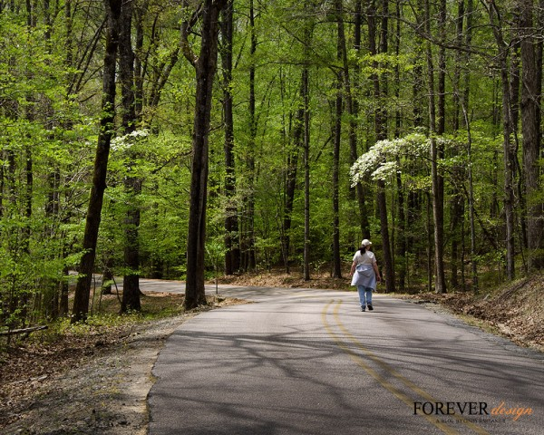 Woods walking