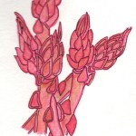 drawing of asparagus using pink watercolor pencil