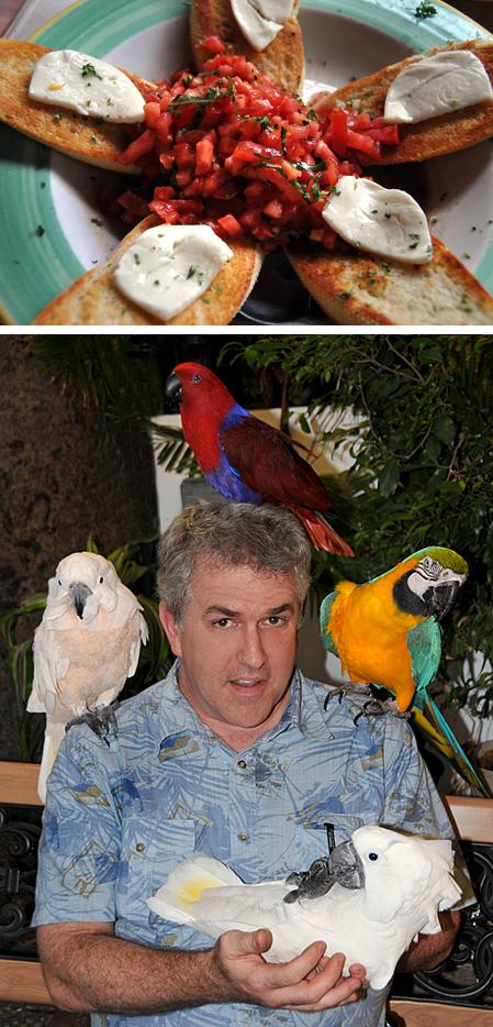 Bruschetta & Birds