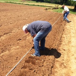 farm planting corn e