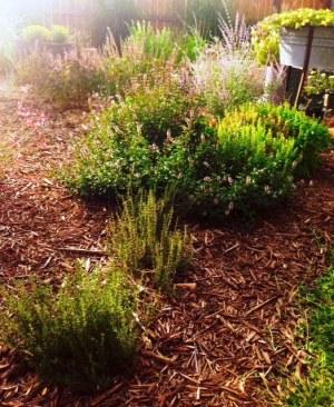 Drying herbs garden e