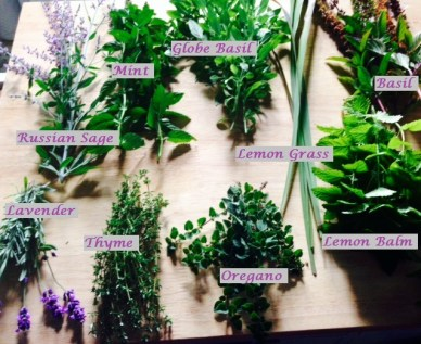 Drying herbs named 2