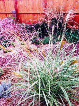 Fall garden 5