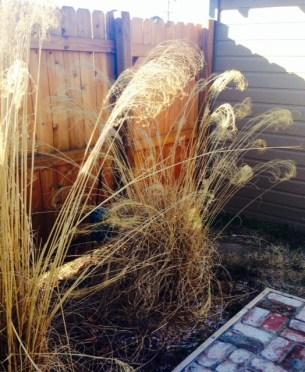 hope of spring grasses
