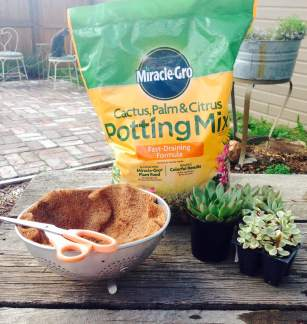 colander planter ingredients