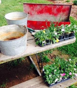 colander planter next project