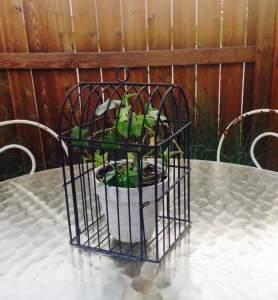 garden tricks ivy