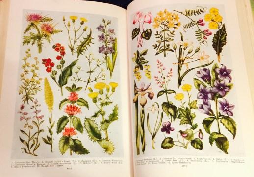 Vintage Flower Prints