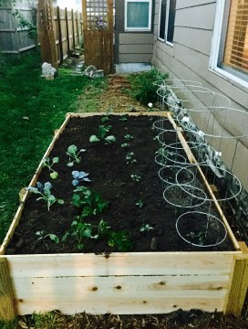 Planting Veggies in the Raised Bed