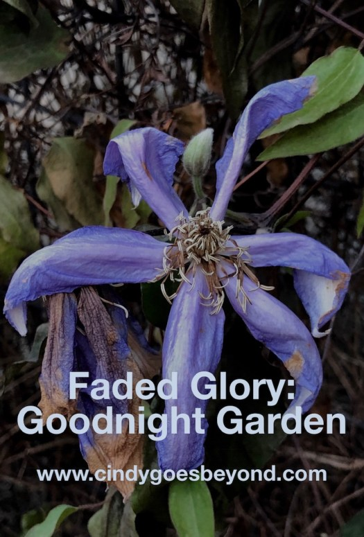 Faded Glory: Goodnight Garden