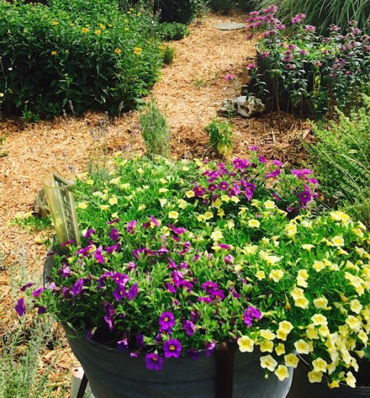 10 Low Maintenance Annuals to Grow