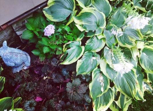10 Shade Garden Plants