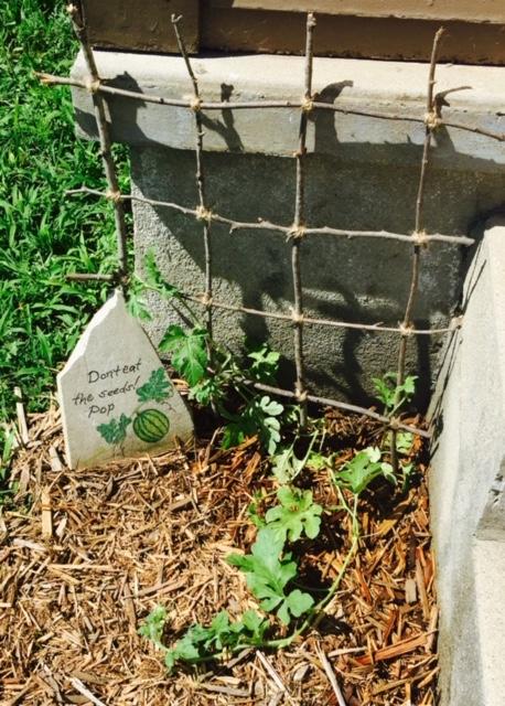 Summer Garden DIY Trellis