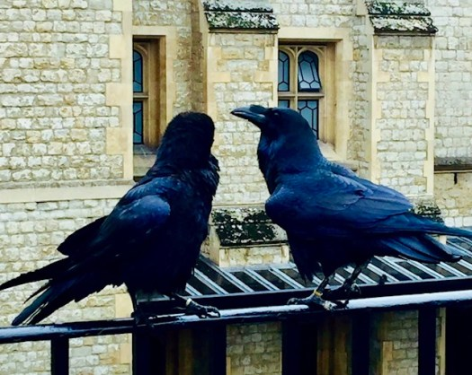 The Tower of London Ravens