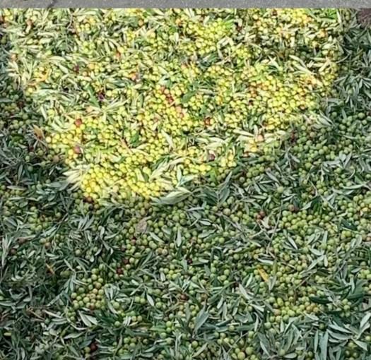 Nina's Olivar Almeria Gold Olive Oil