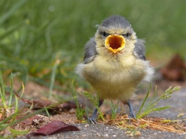 real_life_angry_birds_09