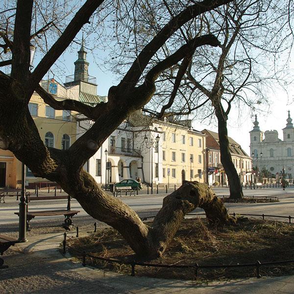 European 2019 Tree of the Year