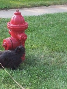 Wordless Wednesday: Neighborhood Water Cooler