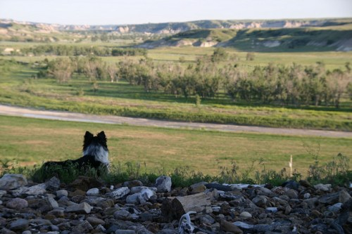 Dog with view of South Dakota