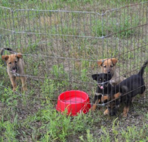 Almost Home Foundation Rescues Pine Ridge Dogs