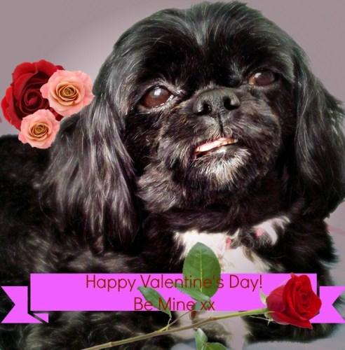 CindyLusMuse Happy Valentine
