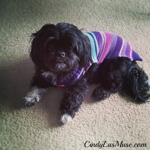 CindyLusMuse My Purple Sweater