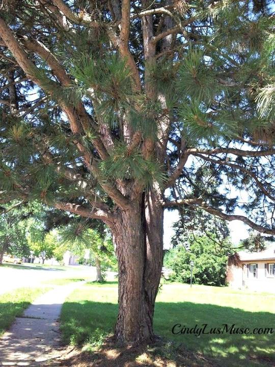 CindyLusMuse-Spirit-Tree-Branches