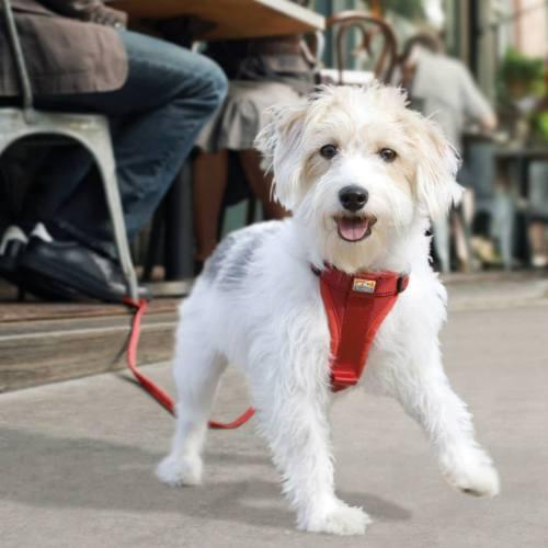 Kurgo Dog Harness Tethered