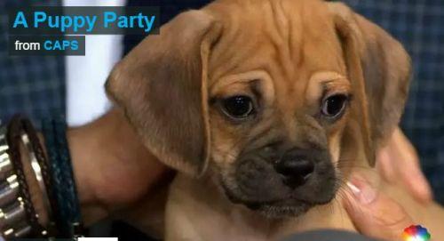 Caps Investigates Puppy Party
