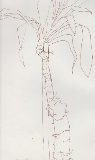 drawing-plants 003