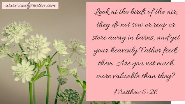 Matthew 6, 26