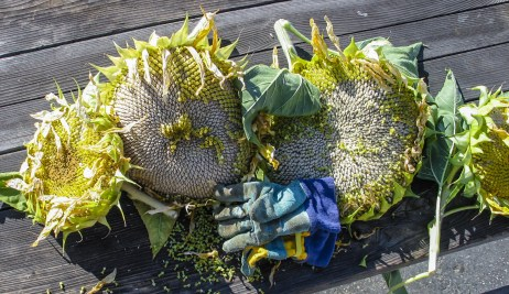 sunflowers_gloves