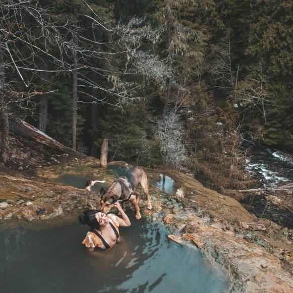 dog at hot springs