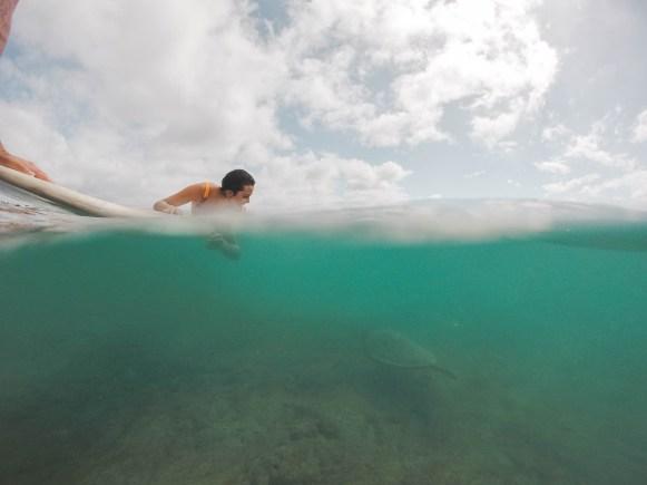 Swimming with turtle in Honolulu