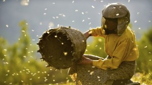 Film Review: Honeyland